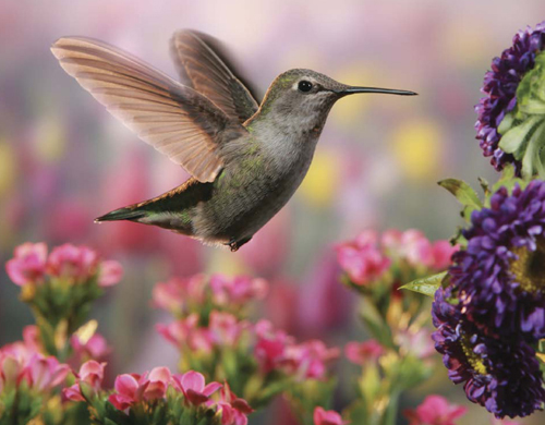 This photograph of a hummingbird in a flower garden was taken using a high-speed exposure time.