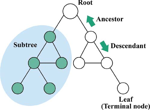 Tree structures are often used to organize, store, and quickly navigate through data. A binary tree is a tree structure in which a parent node can only have two children. Nodes are organized into multiple levels. Algorithms used to traverse these