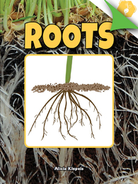 Roots, ed. , v.  Icon