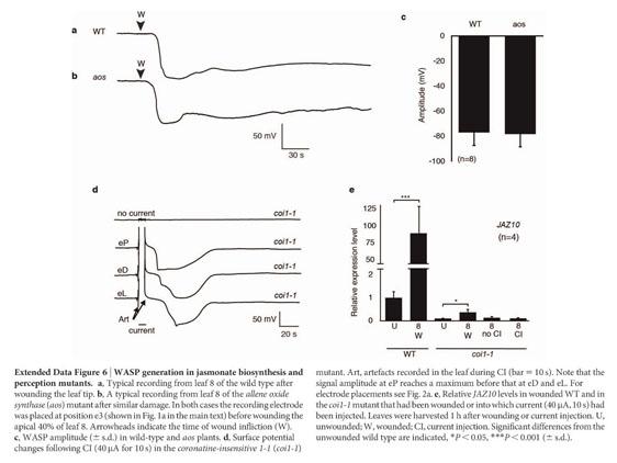 Gale Academic OneFile - Doent - Glutamate receptor-like ... on