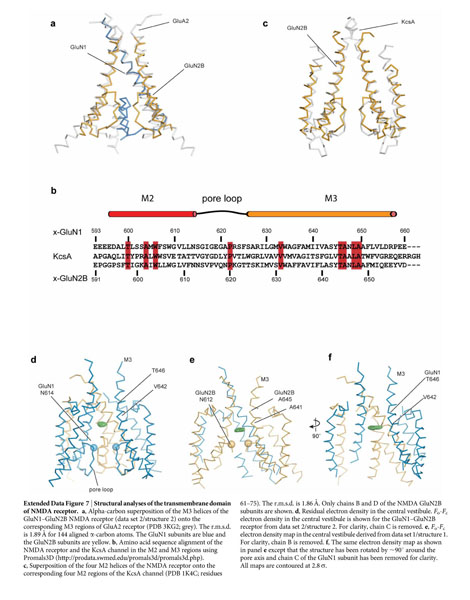 Gale Academic Onefile Document Nmda Receptor Structures Reveal Subunit Arrangement And Pore Architecture