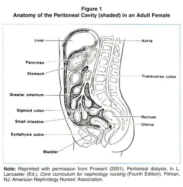 Gale Academic OneFile - Document - How peritoneal dialysis works