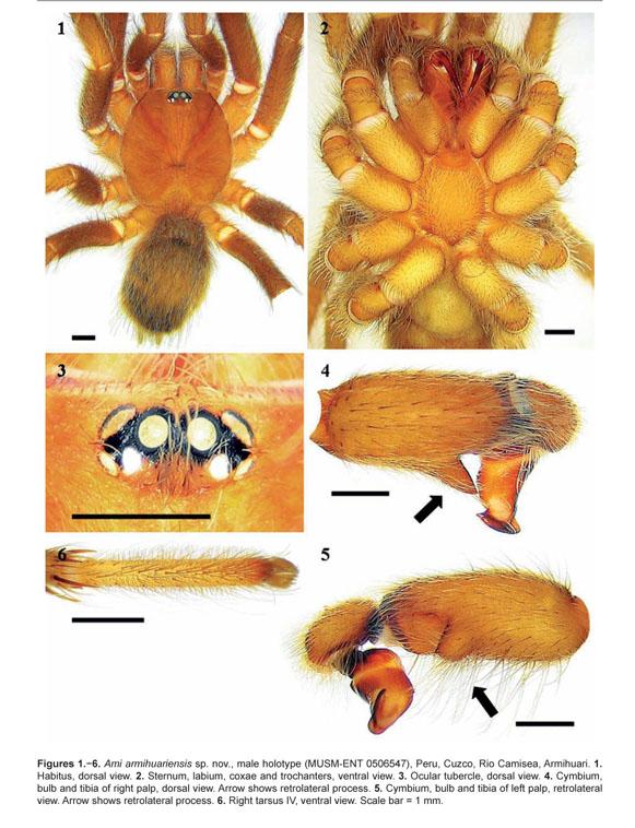Gale Onefile Informe Academico Document Ami Armihuariensis Una Especie Nueva De Peru Araneae Theraphosidae Theraphosinae