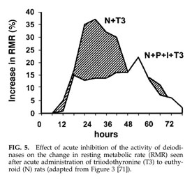 Gale Academic Onefile Document Metabolic Effects Of Thyroid