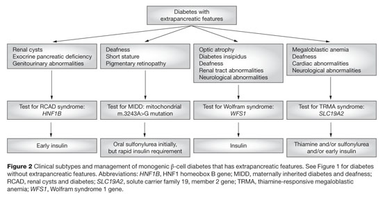 abcc8 diabetes insípida