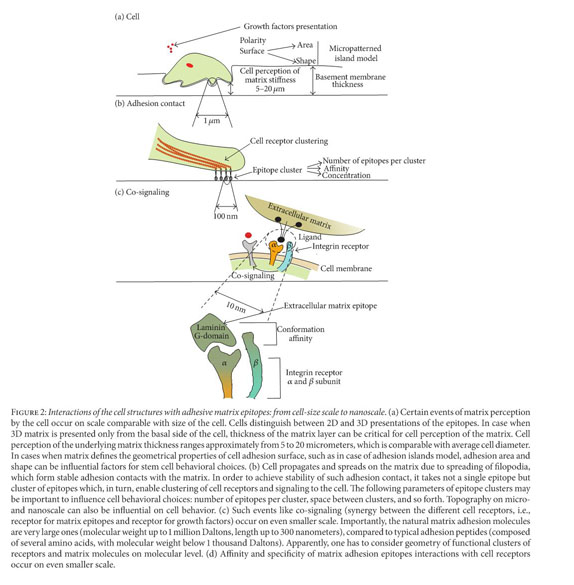 Gale Academic OneFile - Document - Physical, spatial, and