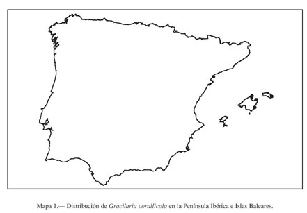 Gale Onefile Informe Académico Document Mapas De Distribucion De Algas Marinas De La Peninsula Iberica E Islas Baleares Xx Gracilaria Corallicola G Gracilis G Multipartita Y Gracilariopsis Longissima Gracilariales Rhodophyta