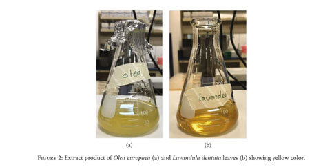 Gale Academic Onefile Document Characterization And Anticancer Potential Of Silver Nanoparticles Biosynthesized From Olea Chrysophylla And Lavandula Dentata Leaf Extracts On Hct116 Colon Cancer Cells