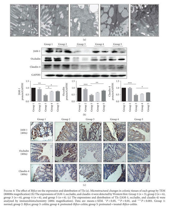 Gale Academic OneFile - Document - Probiotic Mixture
