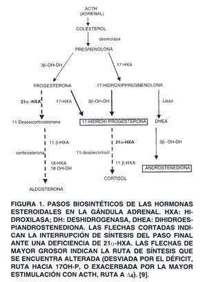 micción frecuente de la enfermedad de Addison
