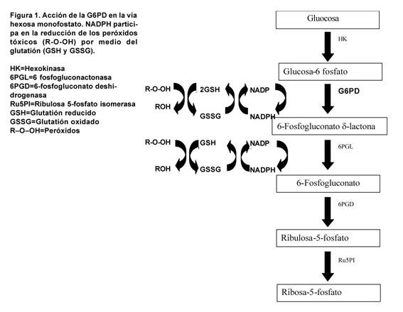 deficiencia de g6pd diagnóstico de laboratorio de diabetes