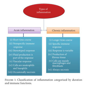 Gale Academic OneFile - Document - Role of Antioxidants and