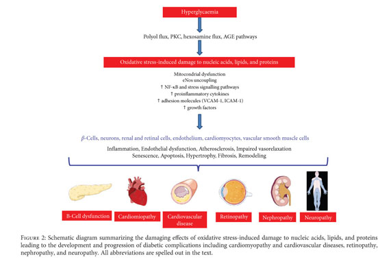Gale Academic Onefile Document Circulating Oxidative Stress