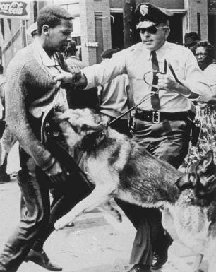 In Birmingham, Alabama, police used attack dogs to break up protests. Here, an African American man tries to pass by police only to be grabbed by the officer and attacked by his dog.