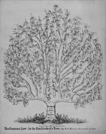 A rendering of a tree represents common law