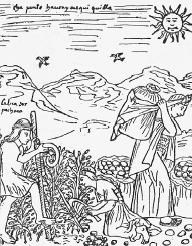 Incas harvesting potatoes.  Bettmann/Corbis.
