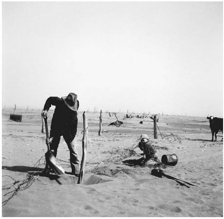 This farmer in Cimarron Country, Oklahoma, put up fencing in 1936 to protect his farm from drifting sand. LIBRARY OF CONGRESS, PRINTS & PHOTOGRAPHS DIVISION, FSA/OWI COLLECTION