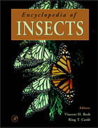 Encyclopedia of Insects, ed. , v.