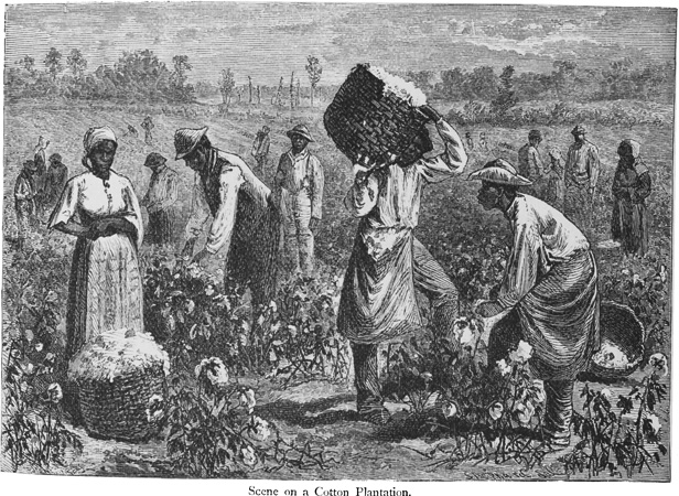 Slaves Working on a Cotton Plantation.