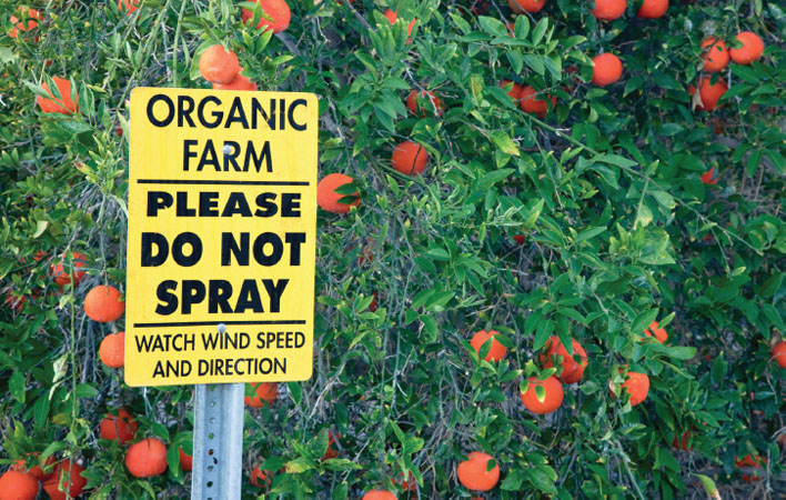 A sign in a minneola citrus orchard states Organic Farm: Please Do Not Spray: Watch Wind Speed and Direction.