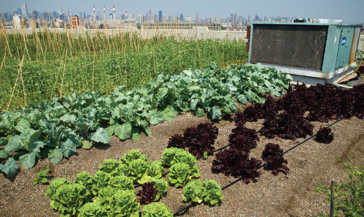 The Brooklyn Grange commercial farm is planted on the roof of a building in the Long Island City neighborhood in the borough of Queens, New York. The rooftop farm, which occupies one acre, is constructed with 1.2 million pounds of soil and prod