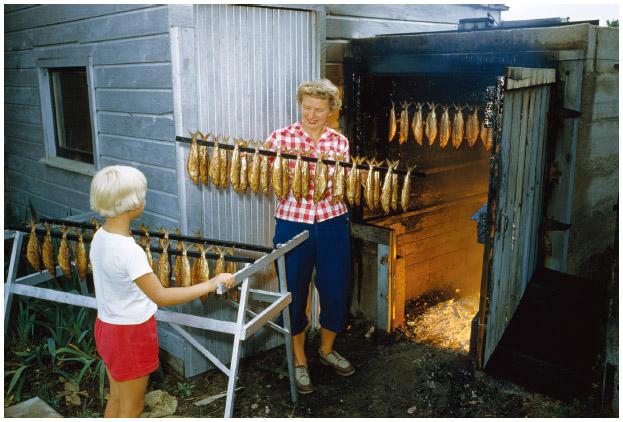 In Washington Island, Wisconsin, an Icelandic American woman prepares lake chub to be smoked over maple fire in smokehouse.