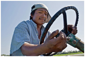 A Mexican migrant worker drives a tractor on a farm in Florida.
