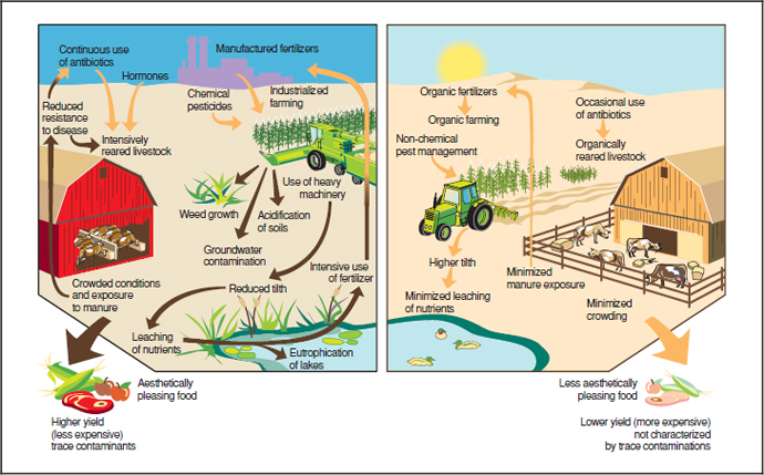 Comparison of organic (right) and conventional (left) farming methods