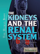 The Kidneys and the Renal System, ed. , v.