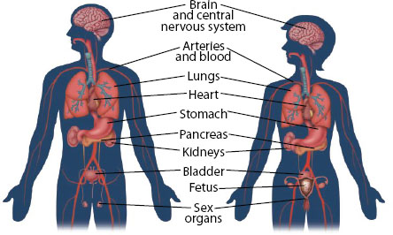 Substance abuse and addiction affect many different parts of the body.