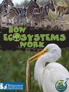 How Ecosystems Work, ed. , v.