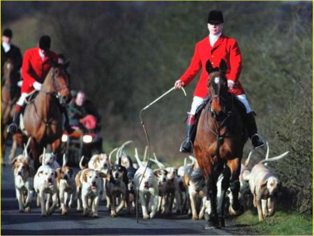 In 2004, the British government banned the sport of foxhunting with dogs in England and Wales.