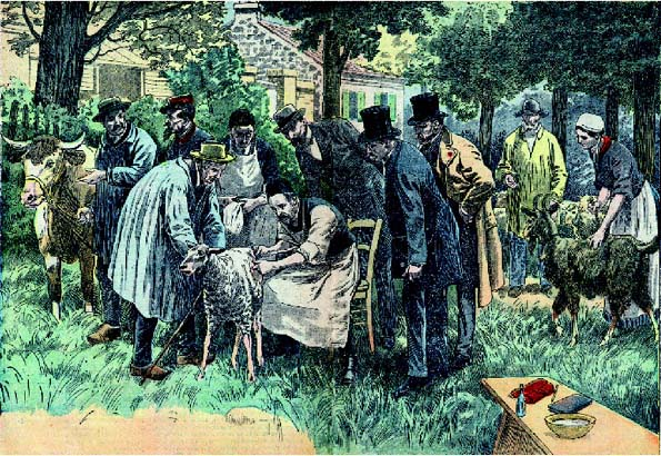 In this illustration, French microbiologist Louis Pasteur (18221895) is shown vaccinating sheep and other animals against anthrax