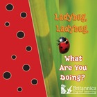 Ladybug, Ladybug, What Are You Doing?, ed. , v.