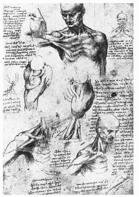 Anatomical chart created by Leonardo da Vinci