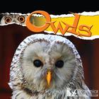 Owls, ed. , v.