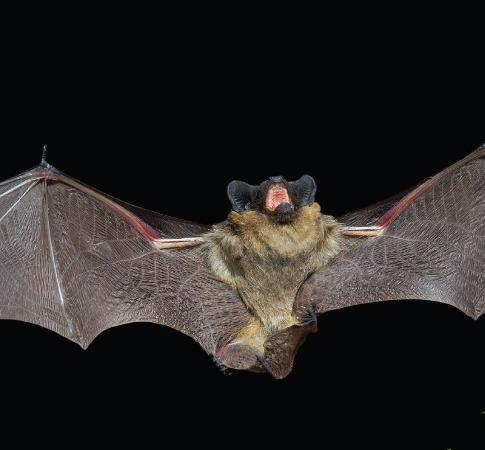 Bats fly.