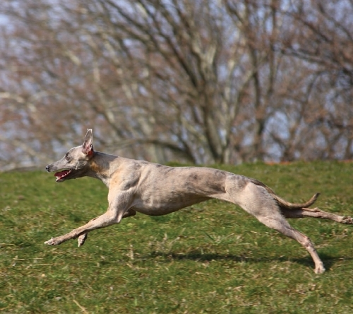 Dogs run, too.