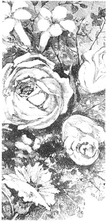 A 19th century print of roses, showing various stages of bloom.