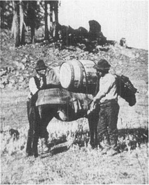 Pack mule being loaded with flour.