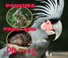 Pouches, Pads, and Plumes, ed. , v.