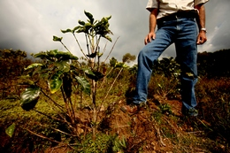 Climate Change Affects Coffee Growers in Costa Rica