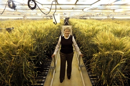 Global Wheat Technology Lead, Dr. Claire CaJacob, in a Monsanto Growth Chamber